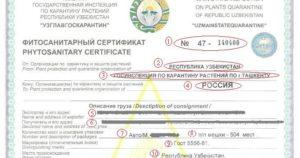 Фитосанитарный и карантинный сертификаты различия. Фитосанитарный и карантинный сертификат
