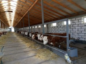 Как построить хорошую ферму для коров. Нюансы выбора земли