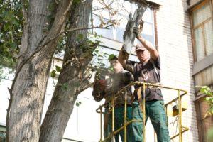 Можно ли спилить дерево во дворе многоквартирного дома и как осуществляется вырубка деревьев на придомовой территории? Как спилить дерево, не нарушая закон.