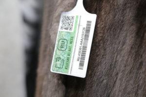 Новые чипы на шубы как проверить. Зачем чипируют шубы в России и как покупателю научиться читать эти коды? Что такое чипирование меховых изделий