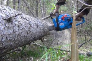 Можно ли пилить упавшие деревья в лесу. Можно ли пилить сухие деревья в лесу