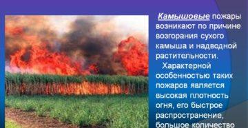 Наибольшее количество природных пожаров происходит. Природные пожары